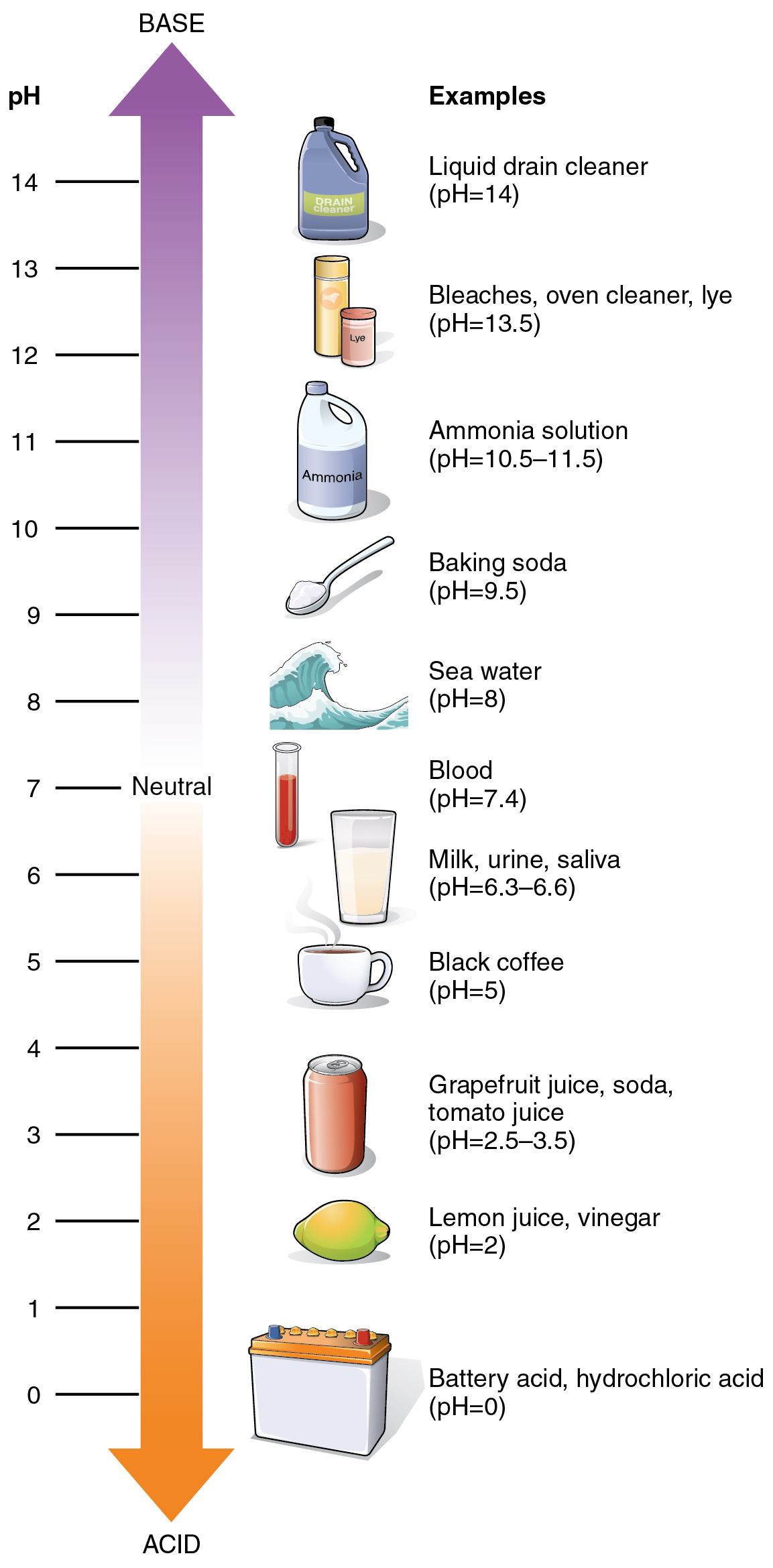 pH scale | pet shampoo